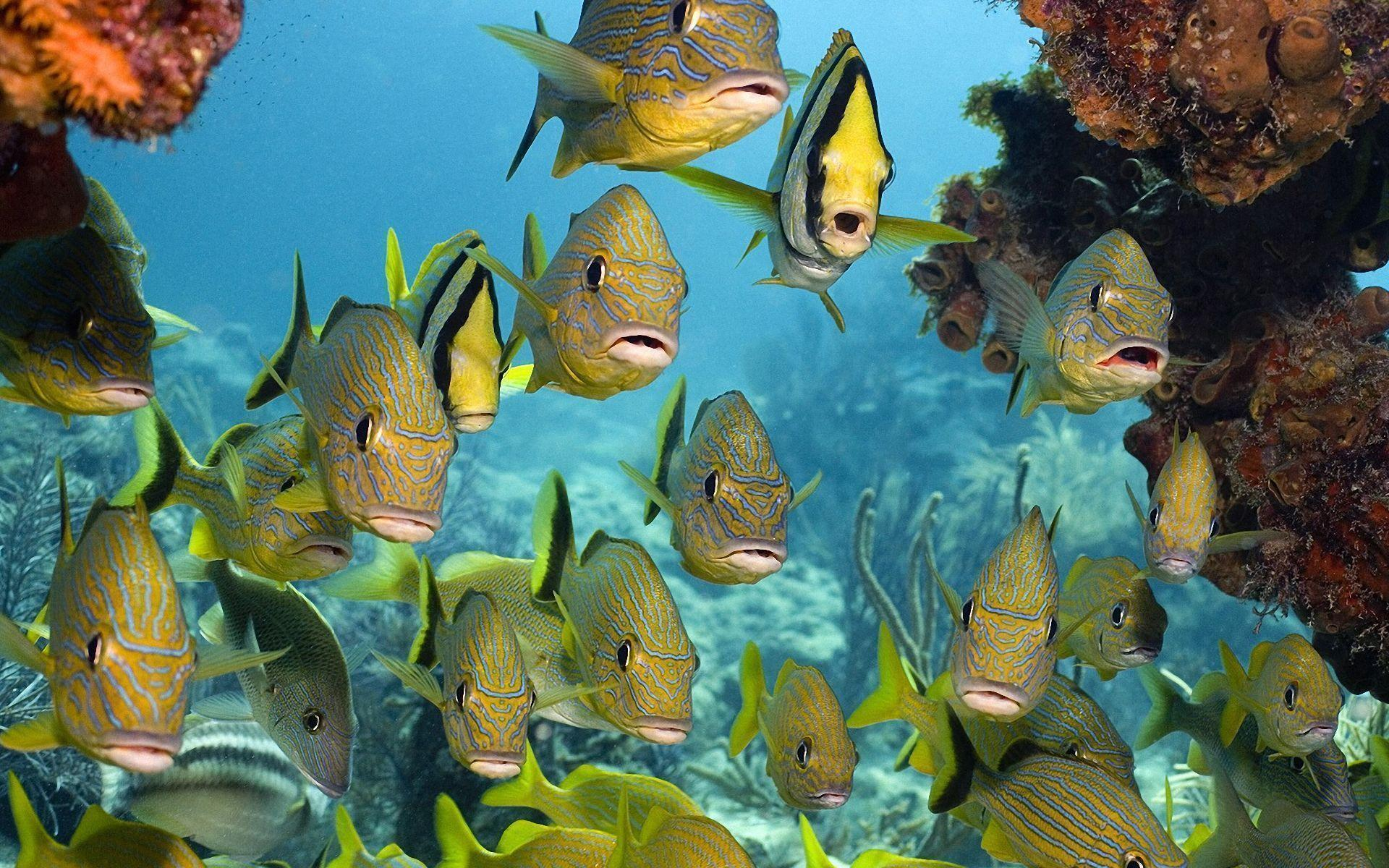 Tropical Fish Backgrounds Wallpapers