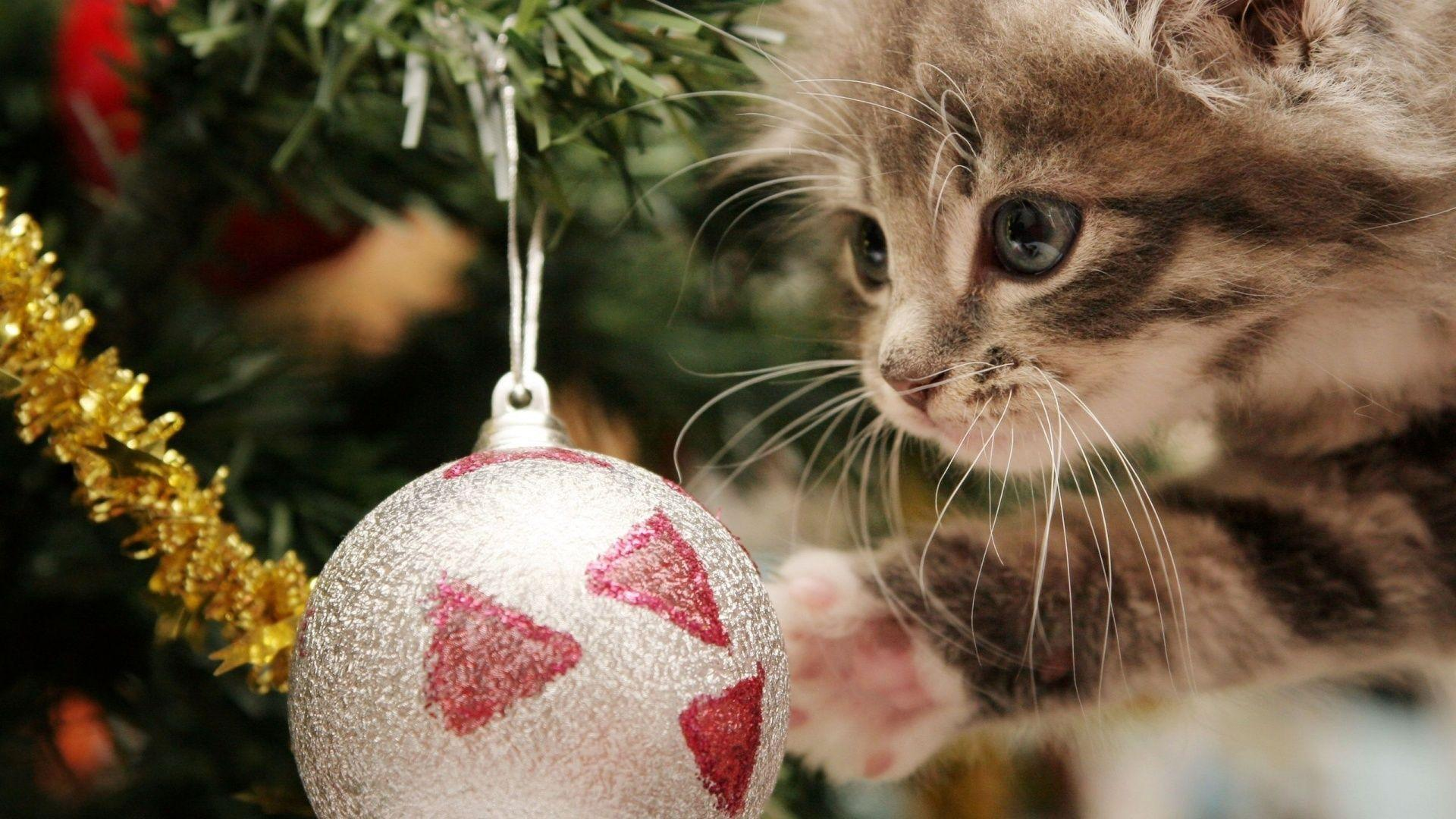 1920x1080 Christmas Cat Wallpapers
