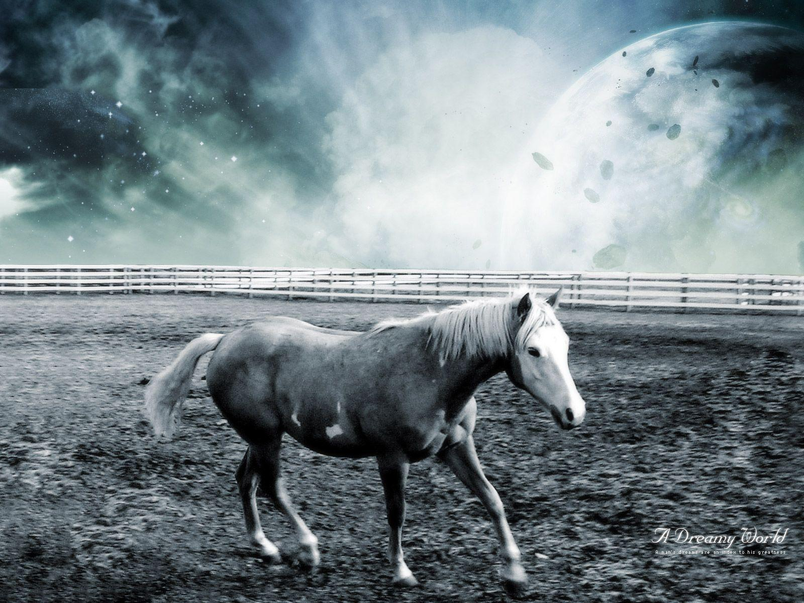 cool horse backgrounds
