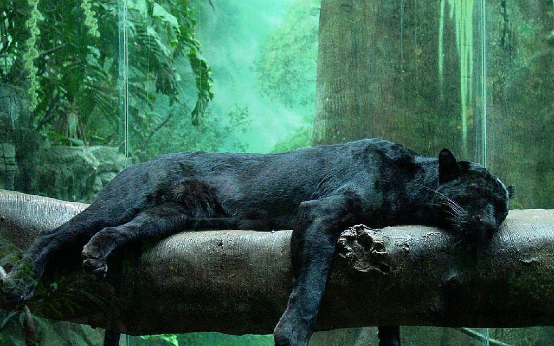 black leopard backgrounds - photo #17