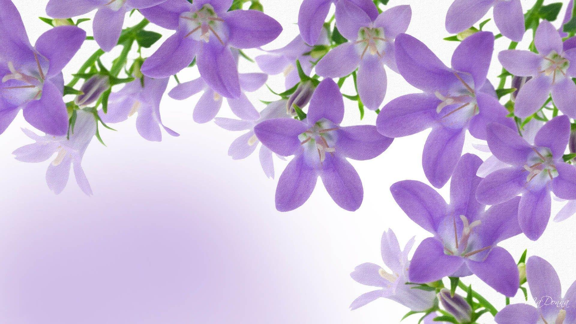 Lavendar Wallpapers - Wallpaper Cave