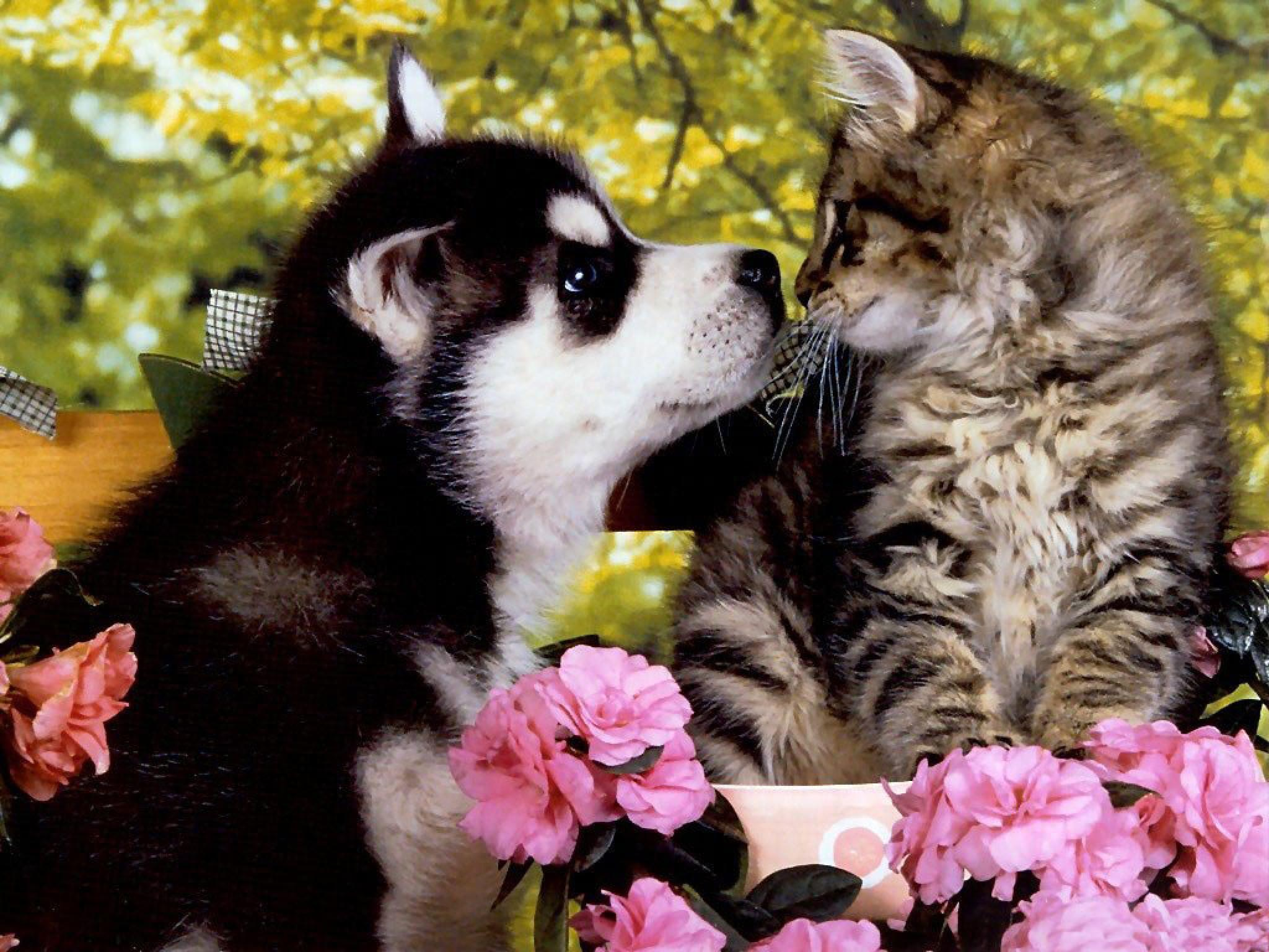 Wallpapers For > Puppy And Kitten Wallpapers Widescreen