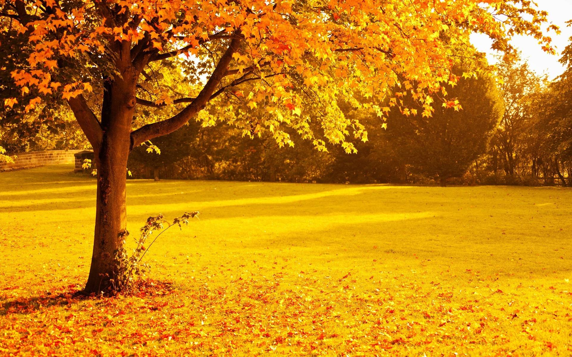 Autumn trees wallpapers wallpaper cave - Family tree desktop wallpaper ...
