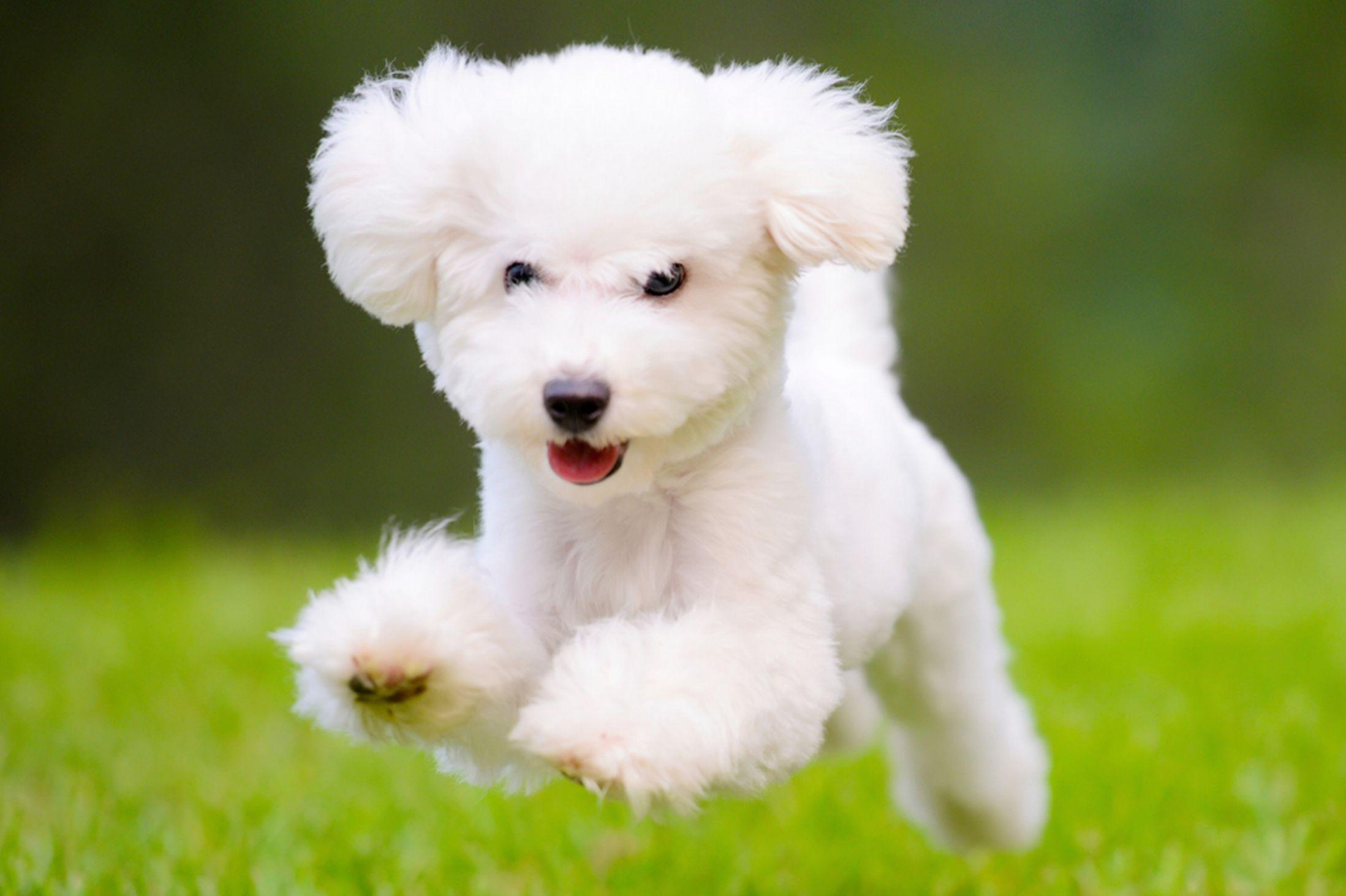 White Dog Wallpapers Wallpaper Cave