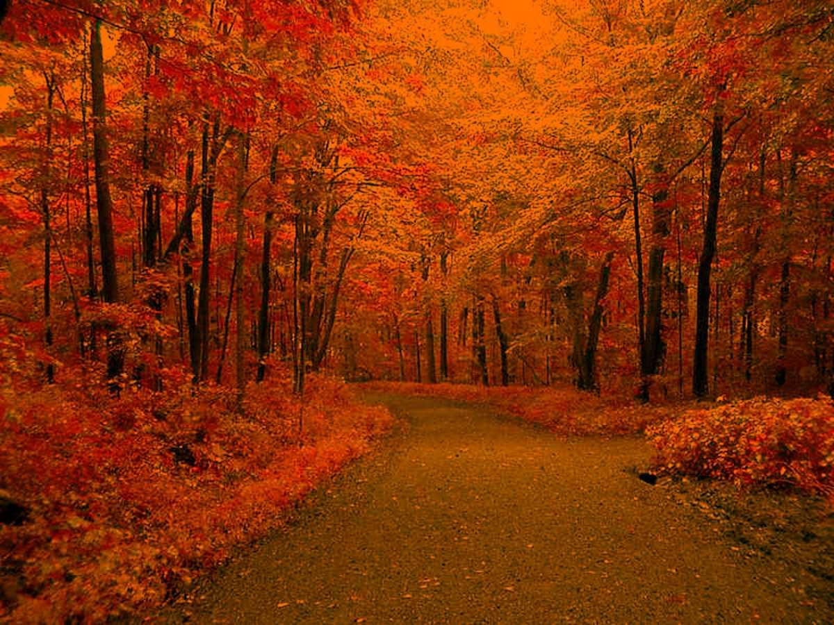 Fall Background Pics - Wallpaper Cave