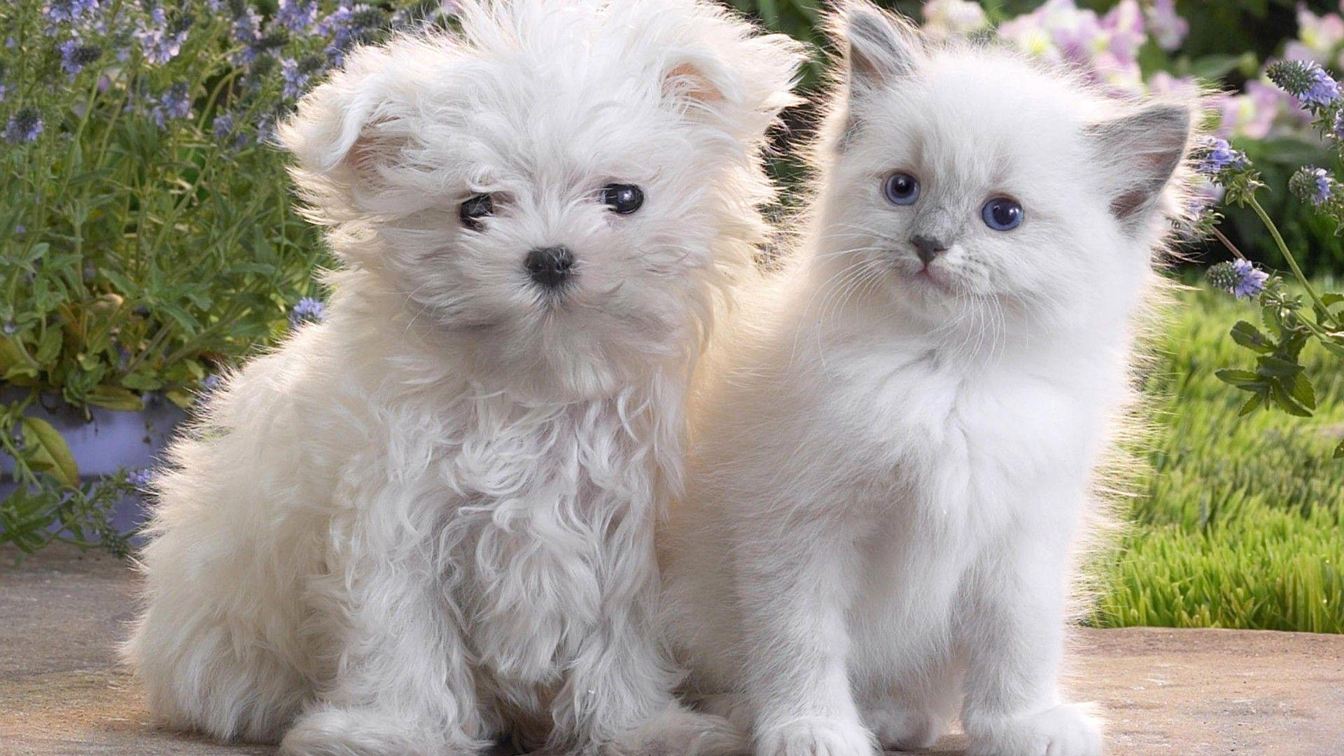 Puppies and Kittens Wallpapers for Laptop High Quality Download
