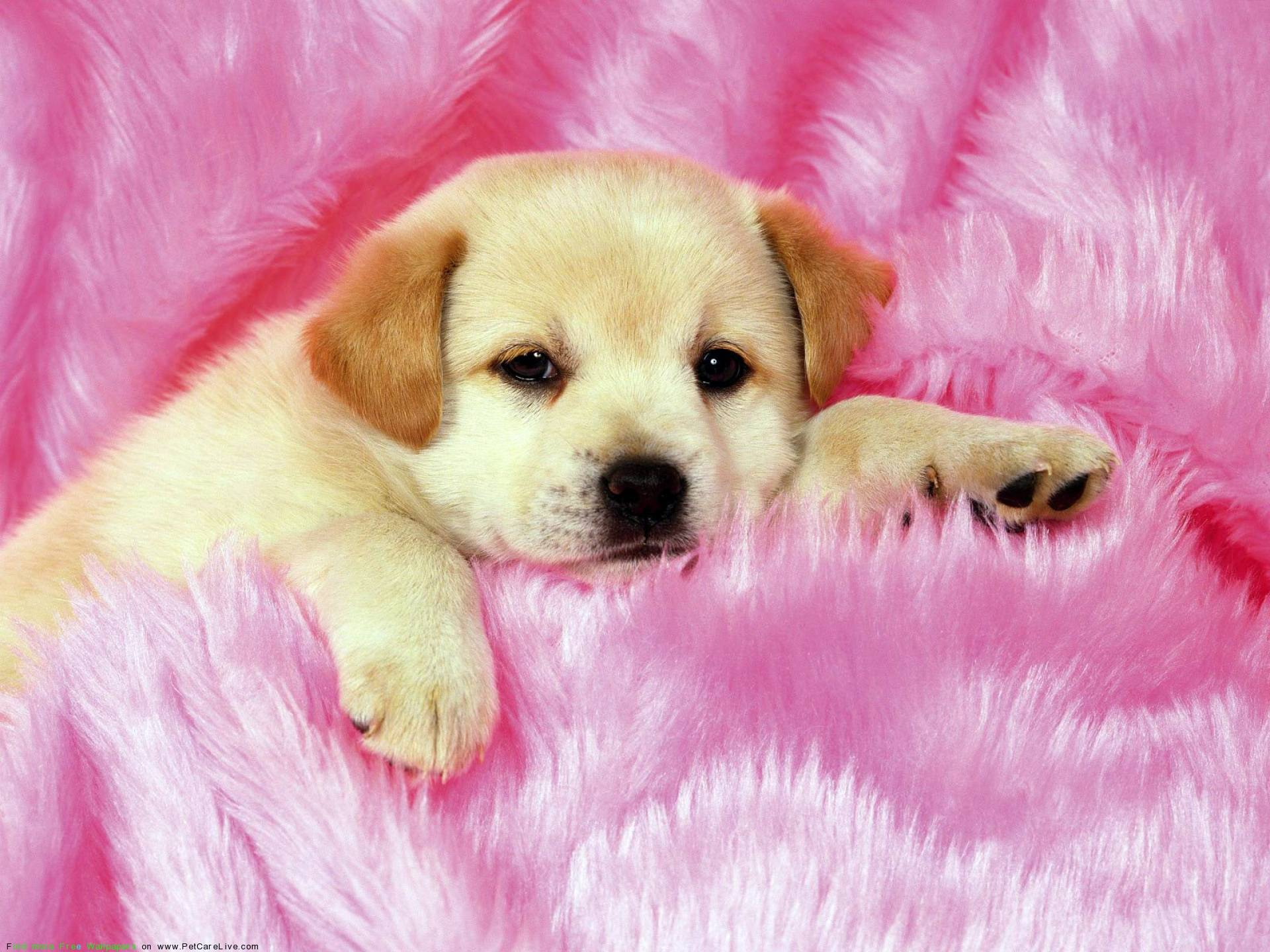 puppy dog wallpaper - photo #25