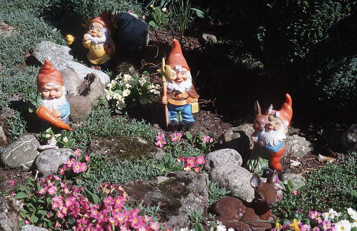Gnome In Garden: Garden Gnome Wallpapers