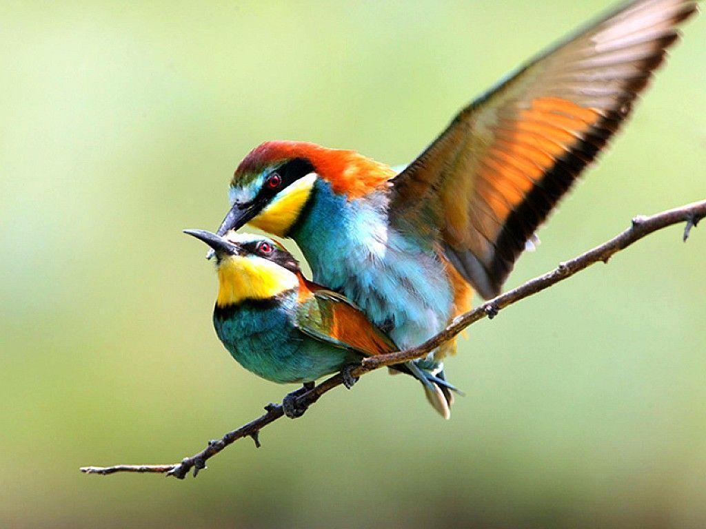Wallpapers Love Birds Desktop Wallpapers: Wallpapers Love Birds