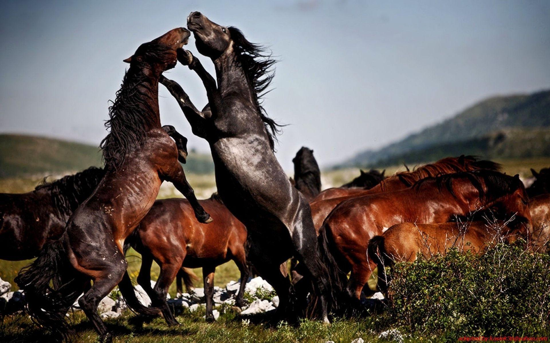 HD Wild Horses Wallpaper | Download Free – 121963 / Wallpaper .