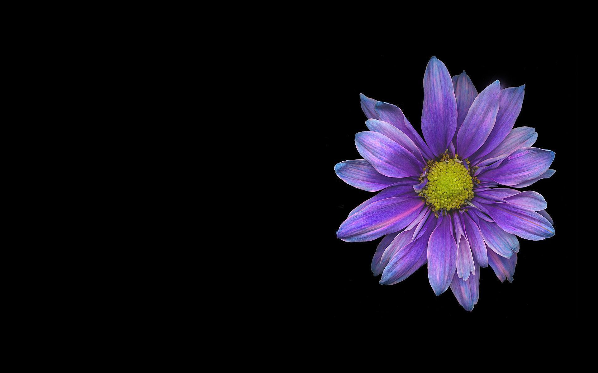 Single Flower wallpaper - 460675