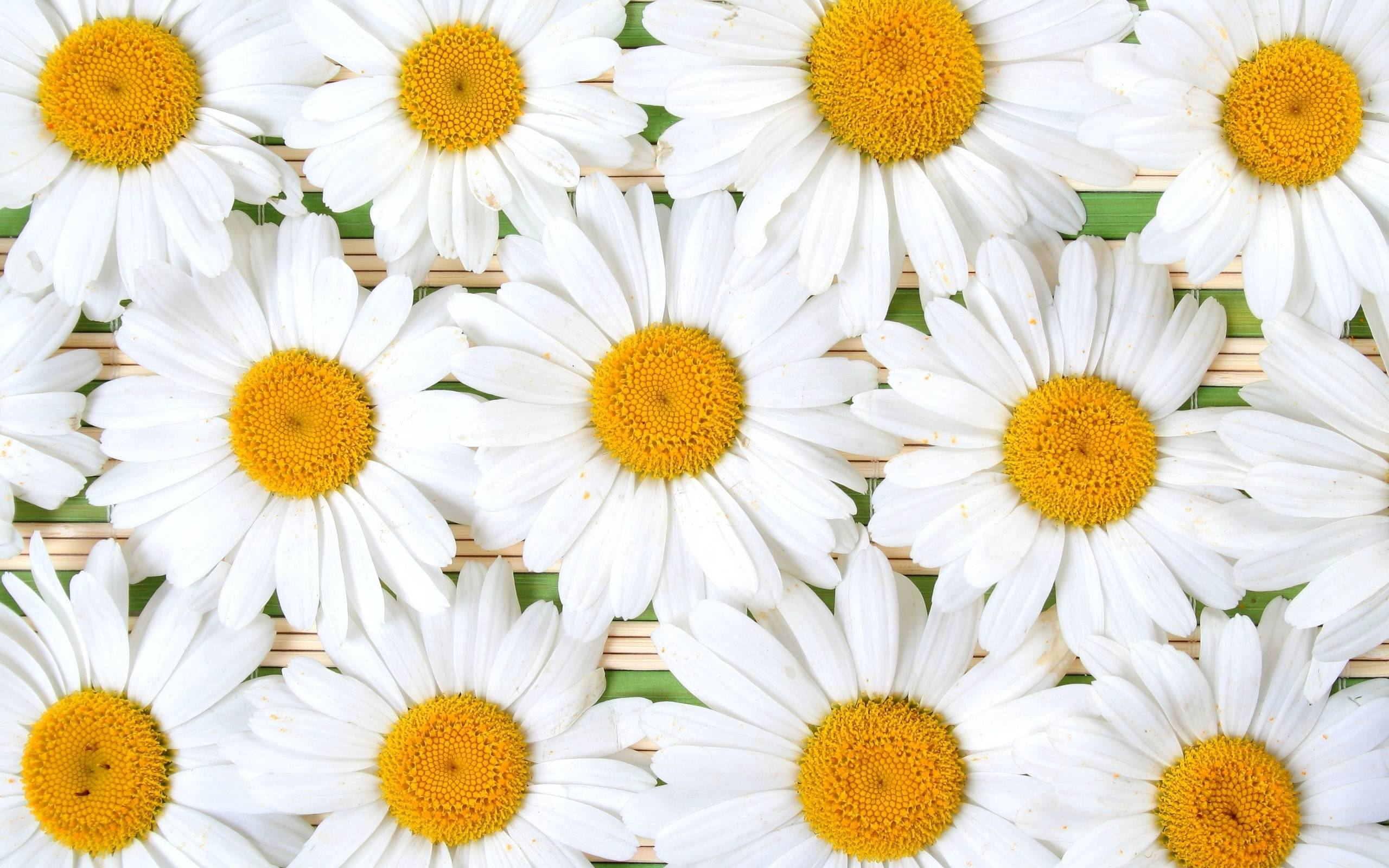 139 Daisy Wallpapers