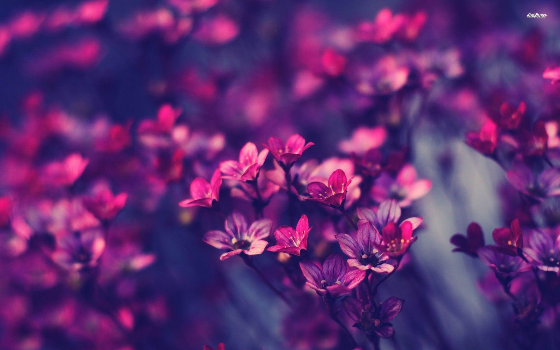 Violet Wallpapers Wallpaper
