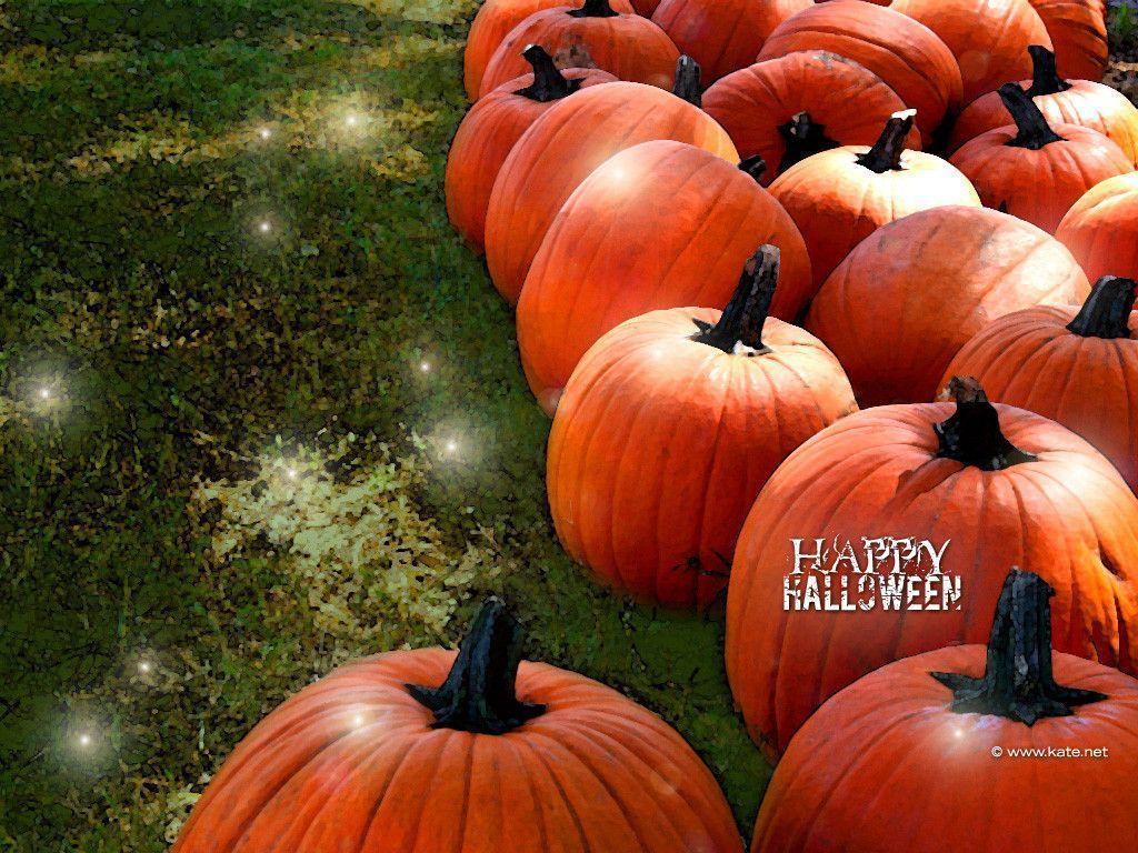 free hd pumpkin wallpaper - photo #22