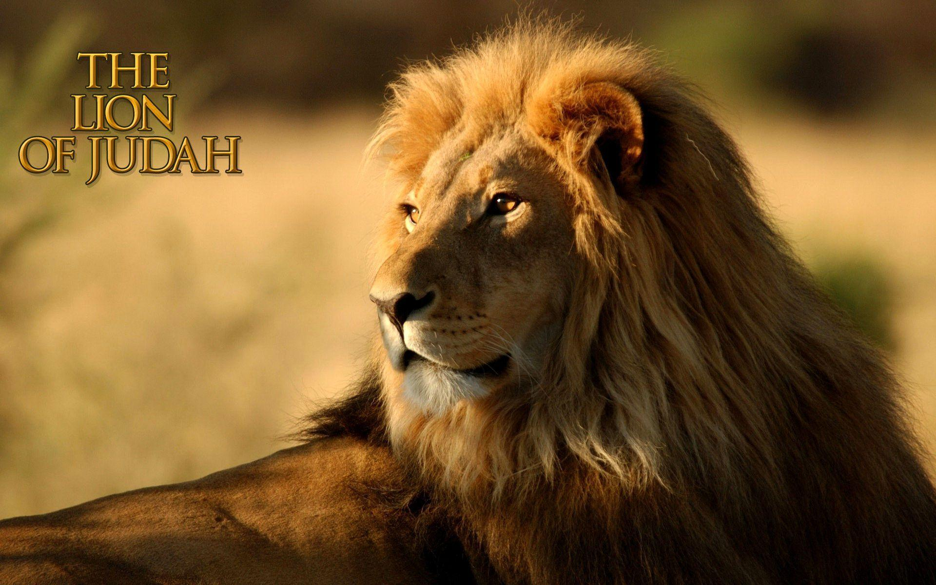 Lion Of Judah Wallpapers Wallpaper Cave