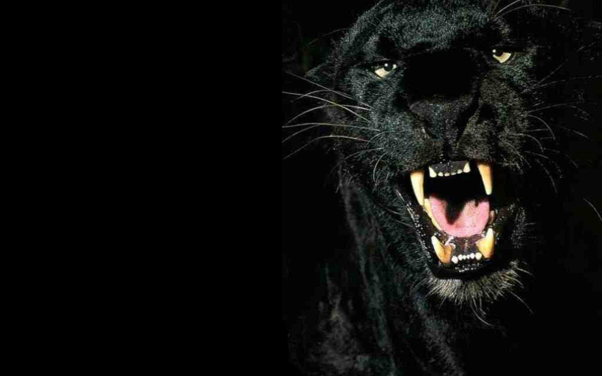 black leopard backgrounds - photo #8