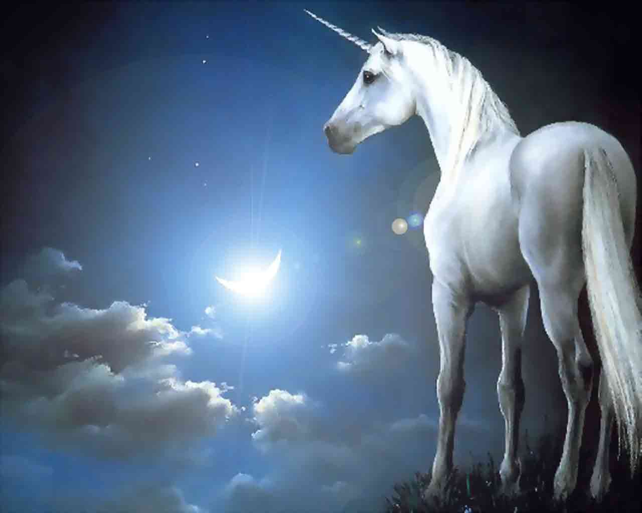Hd wallpaper unicorn - Free Wallpapers Celestial Unicorn Wallpaper