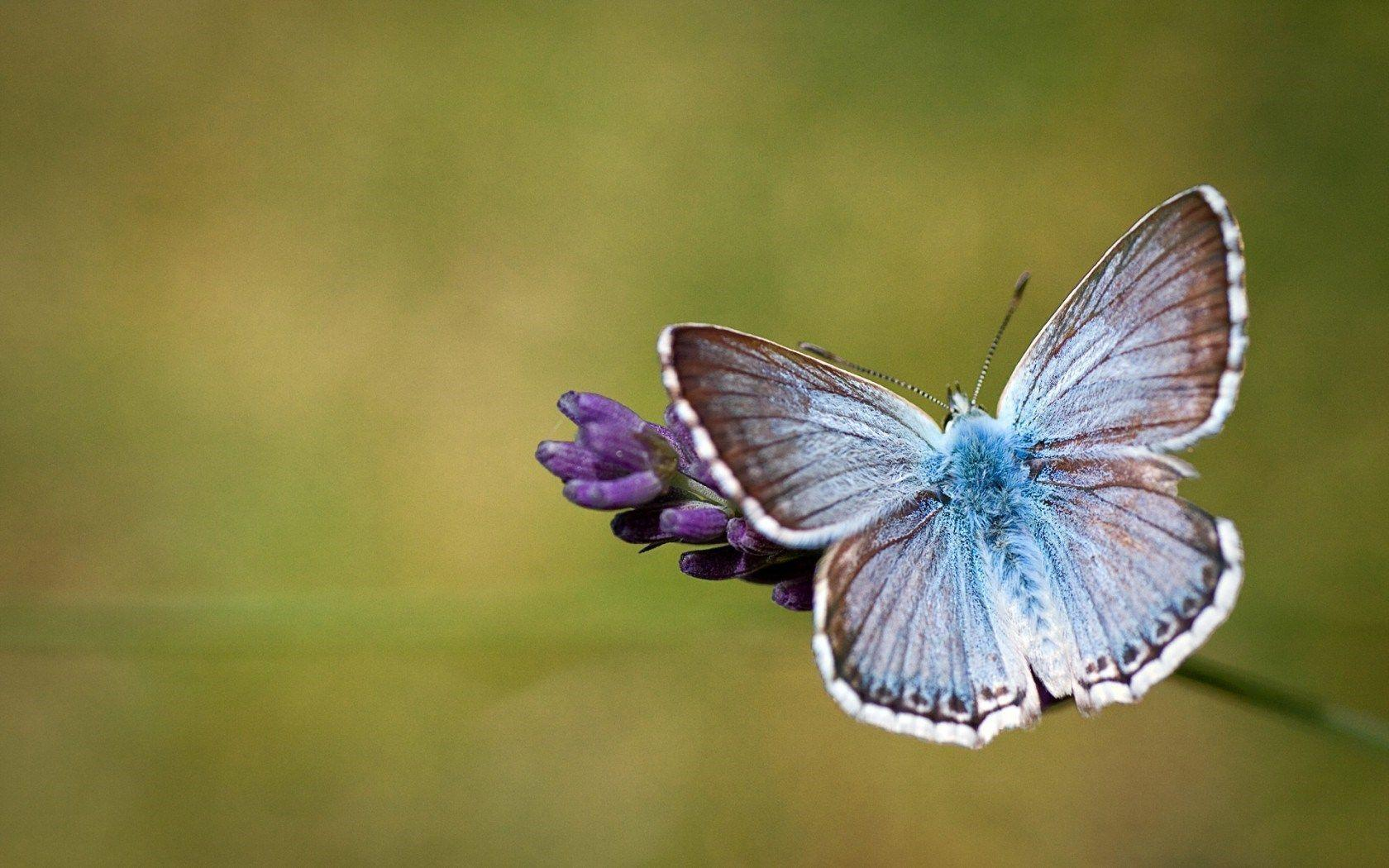 butterfly hq wallpaper 1024x768 - photo #13