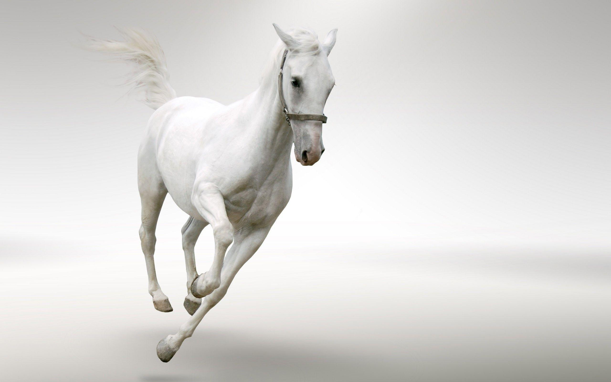 Animals For > 7 White Horses Running Wallpapers
