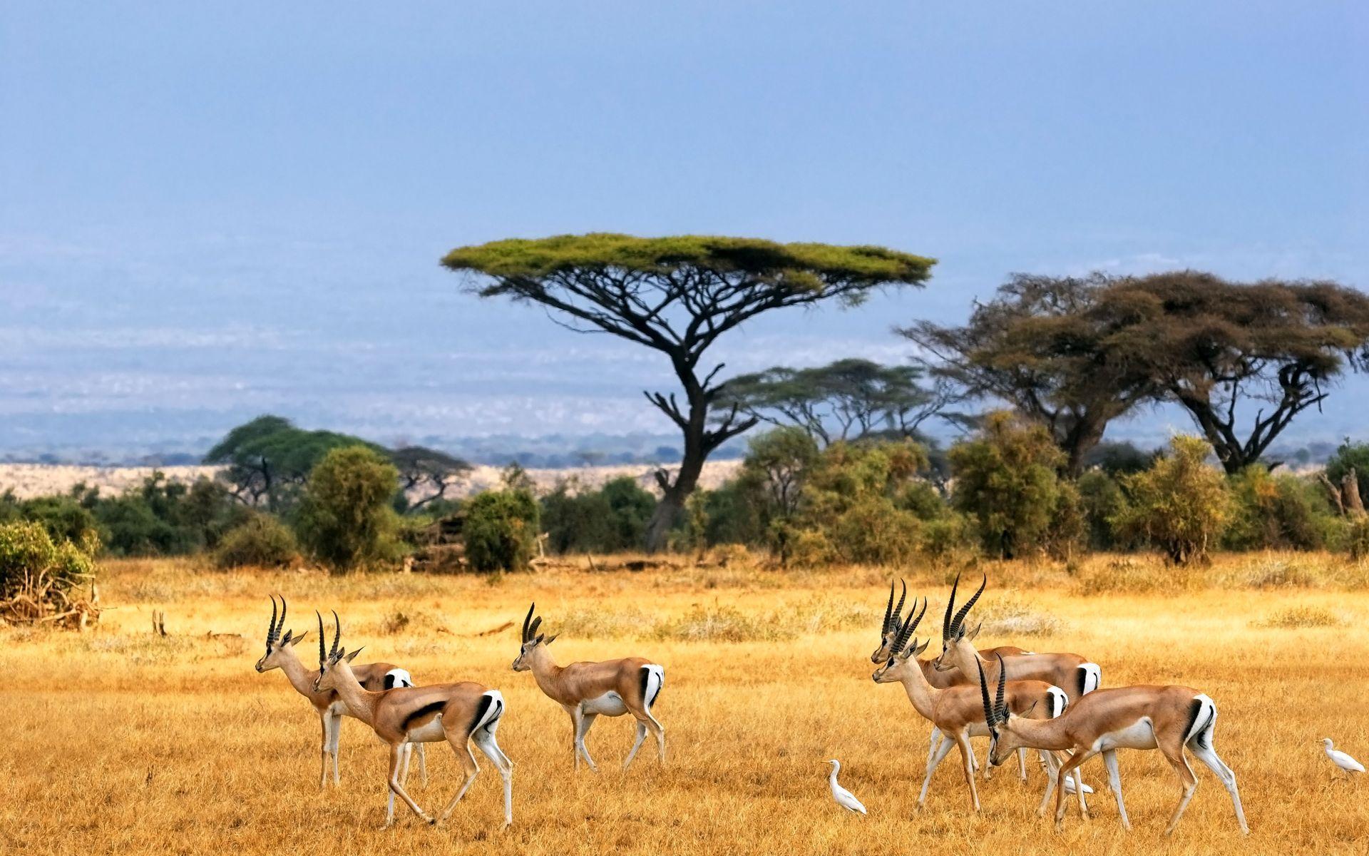 African Safari Wallpaper - iBackgroundWallpaper