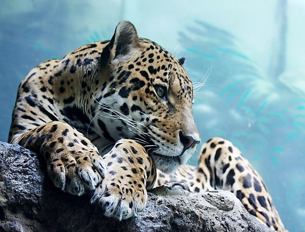 cool animal wallpapers wallpaper cave
