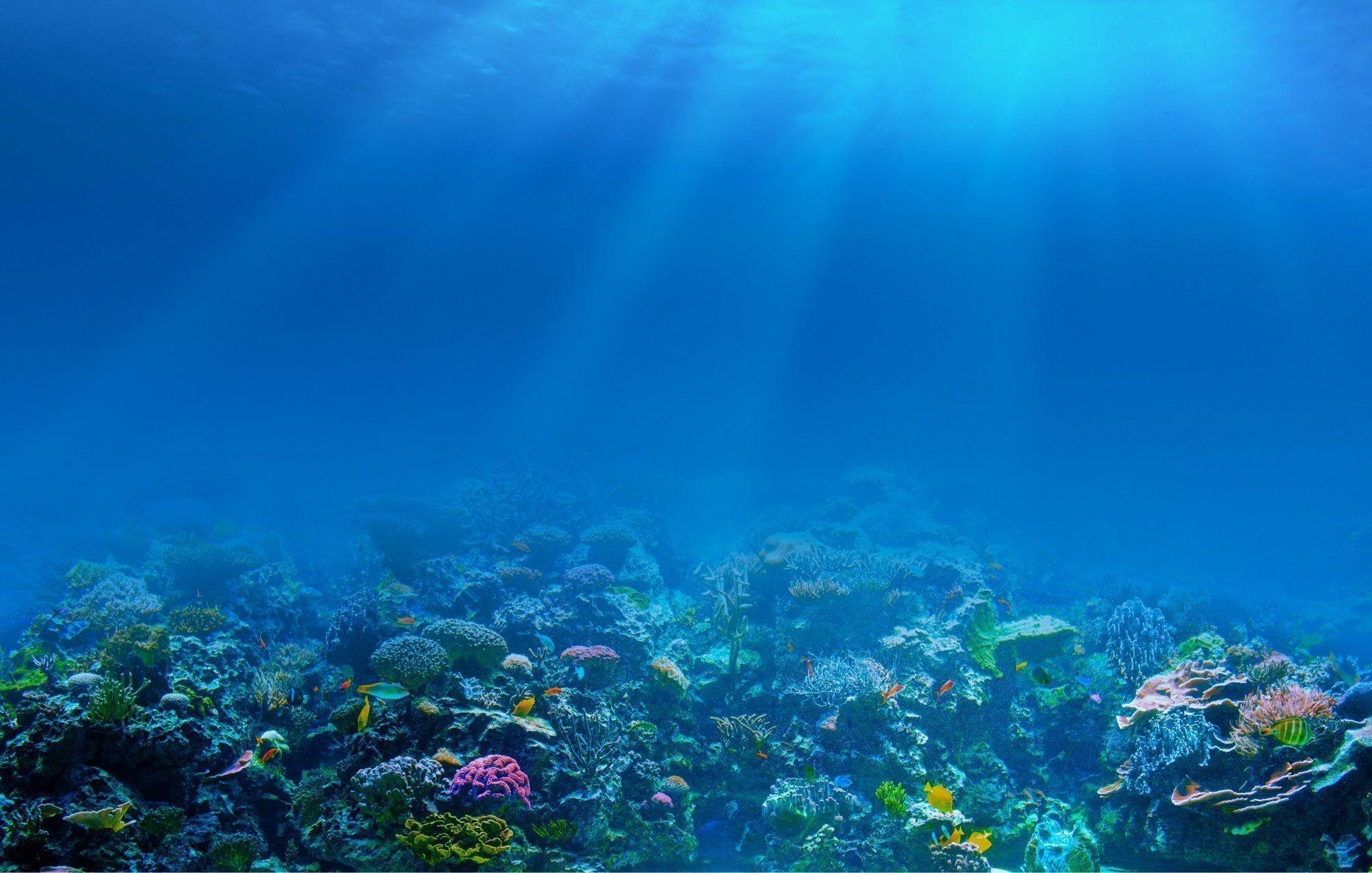Coral Reef Backgrounds - Wallpaper Cave