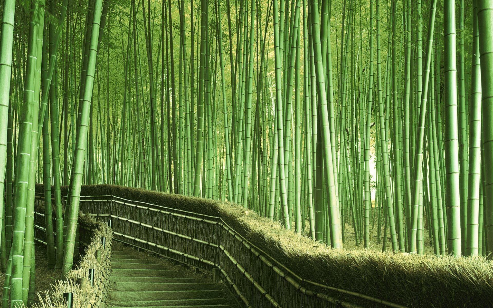 bamboo wallpaper by doantrangnguyen - photo #8