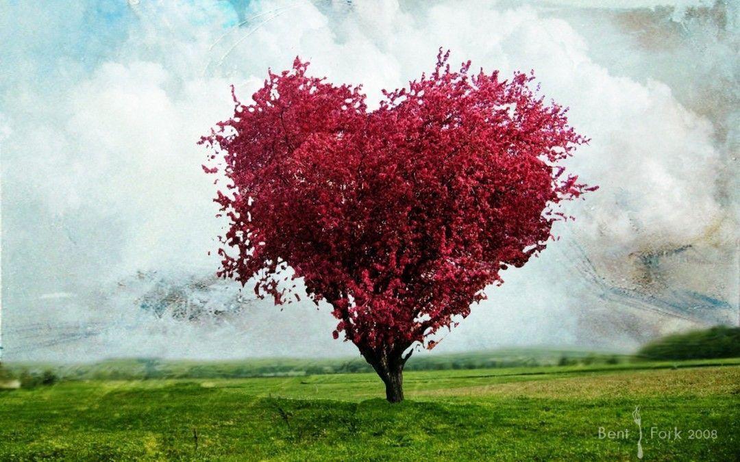 Love Wallpaper HD