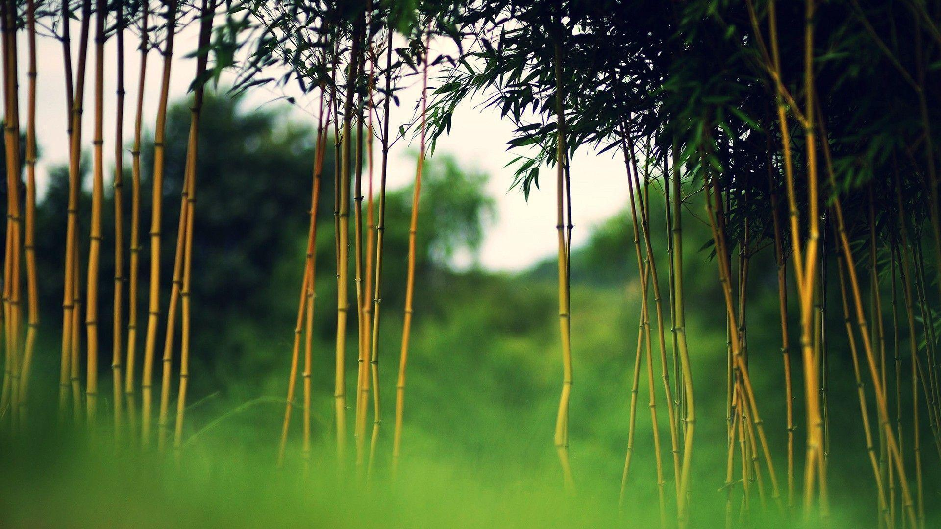 Bamboo desktop wallpapers wallpaper cave for Bamboo wallpaper for walls