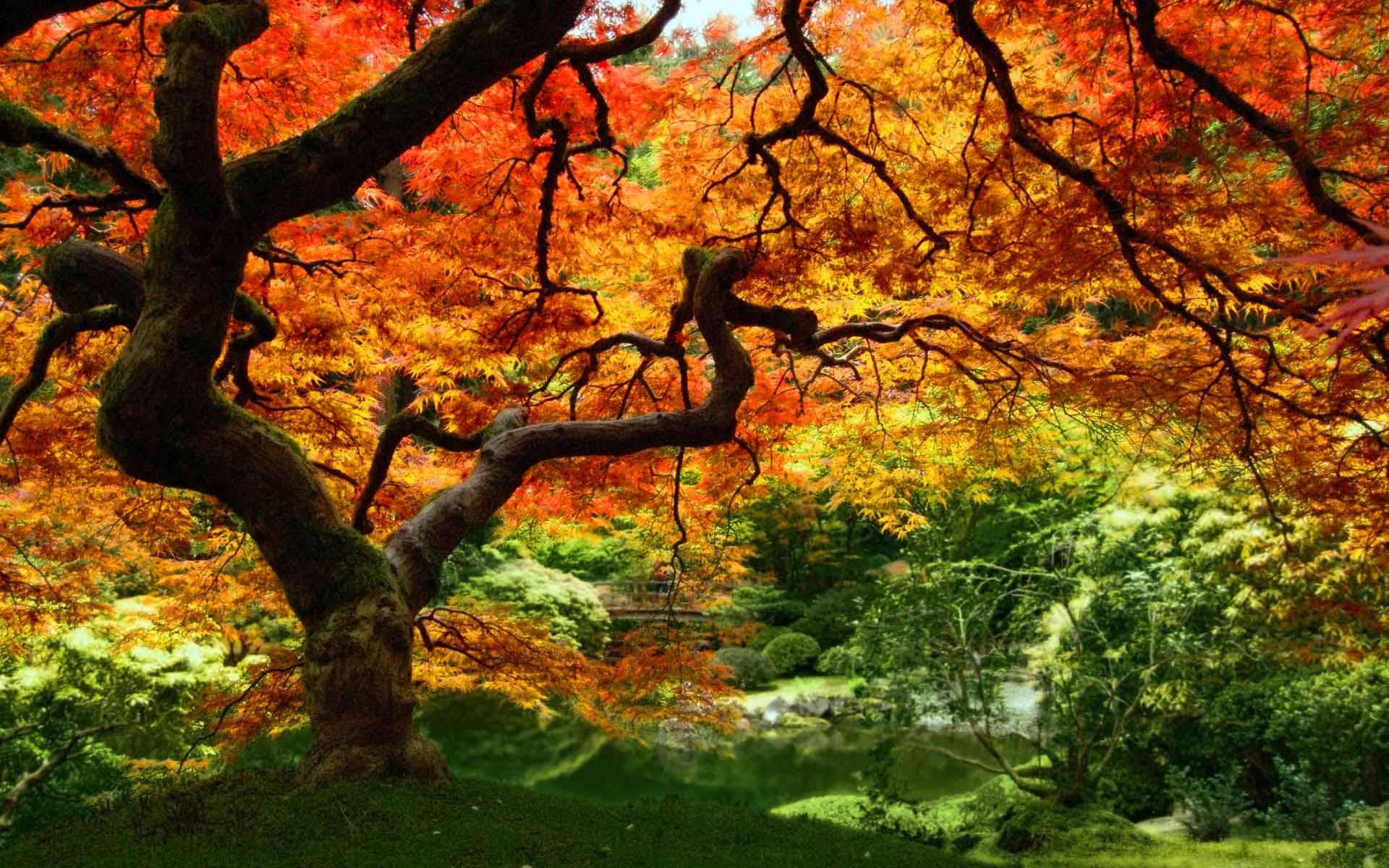 autumn wallpaper 007 free - photo #45