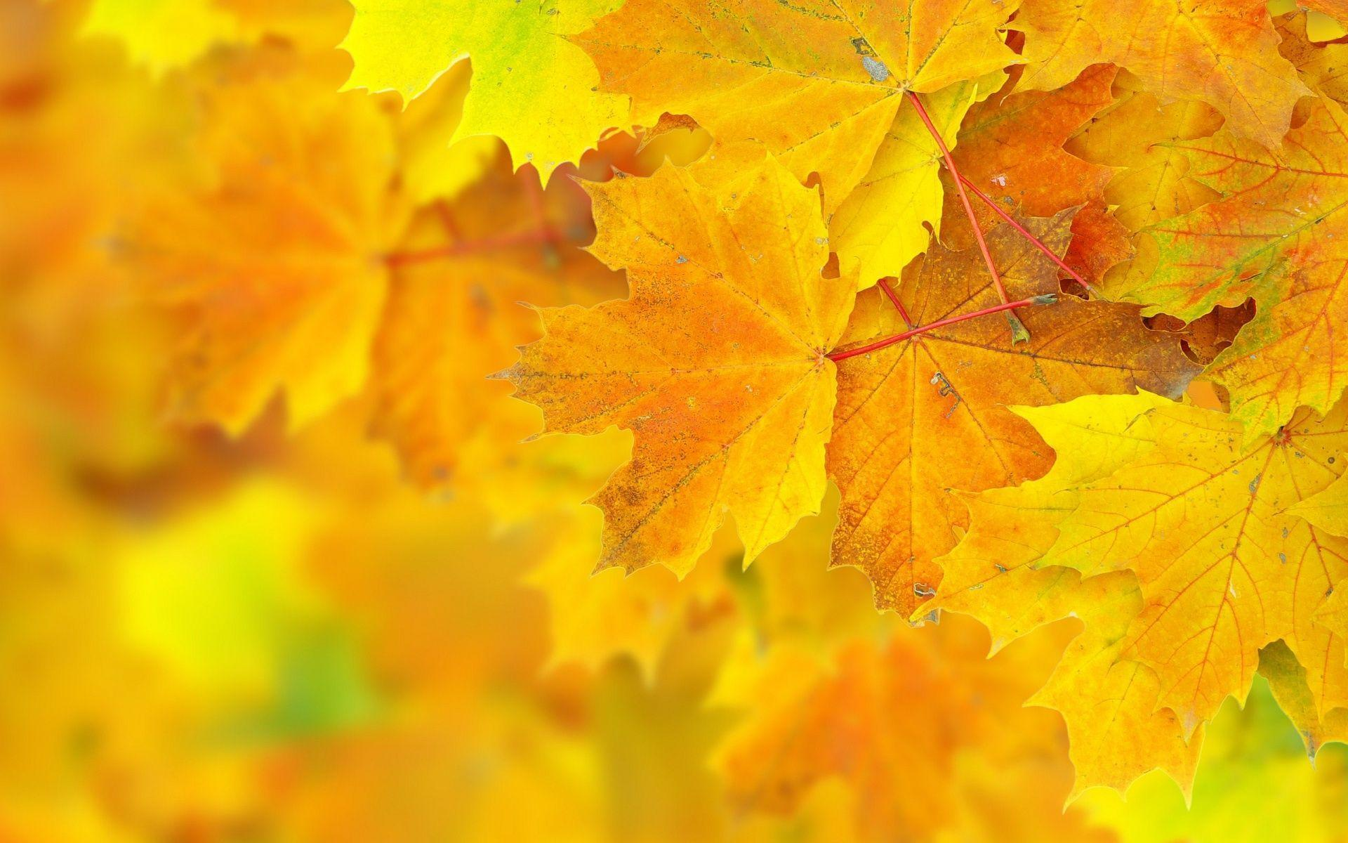 1920x1200 Autumn Yellow Leaves Wallpaper