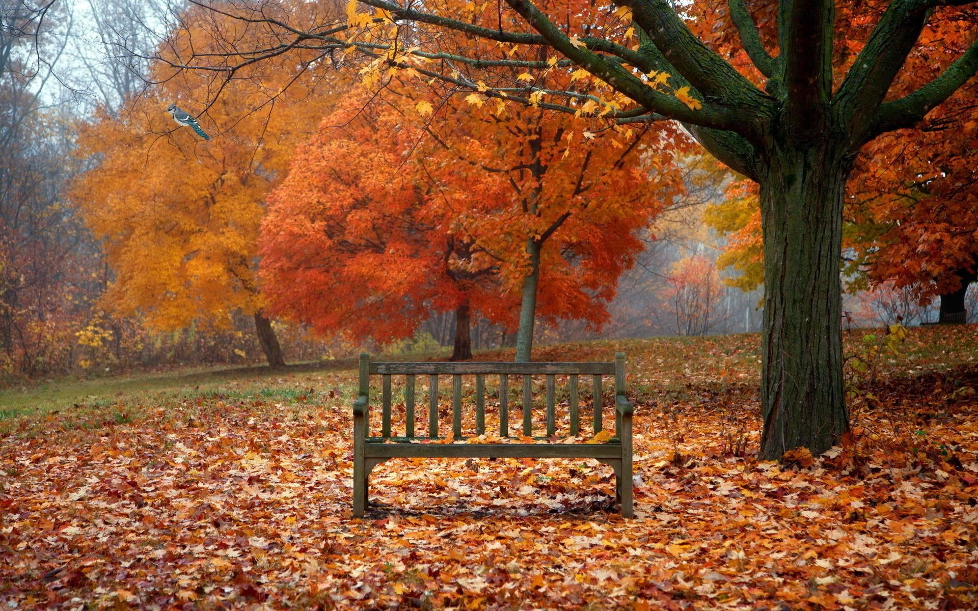 desktop wallpaper fall scenes www