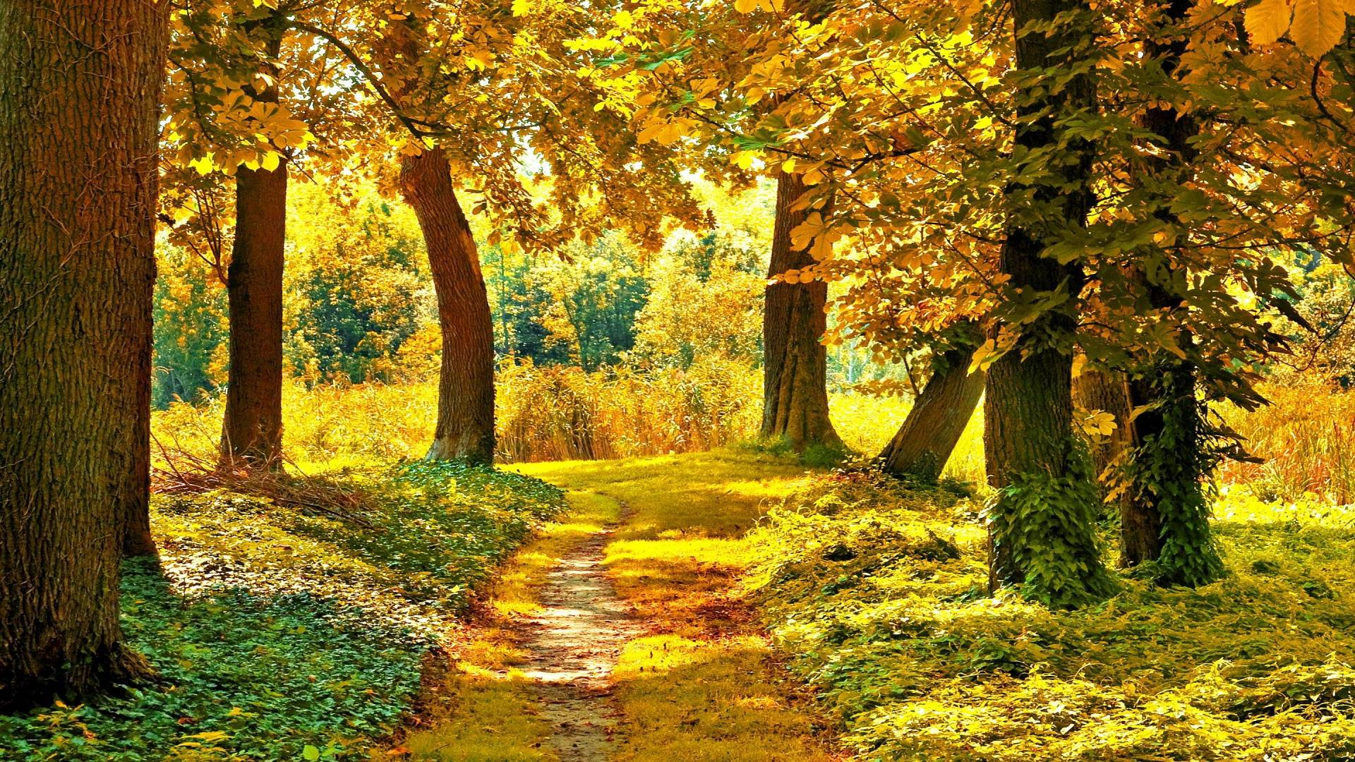 landscape autumn hd wallpaper - photo #8