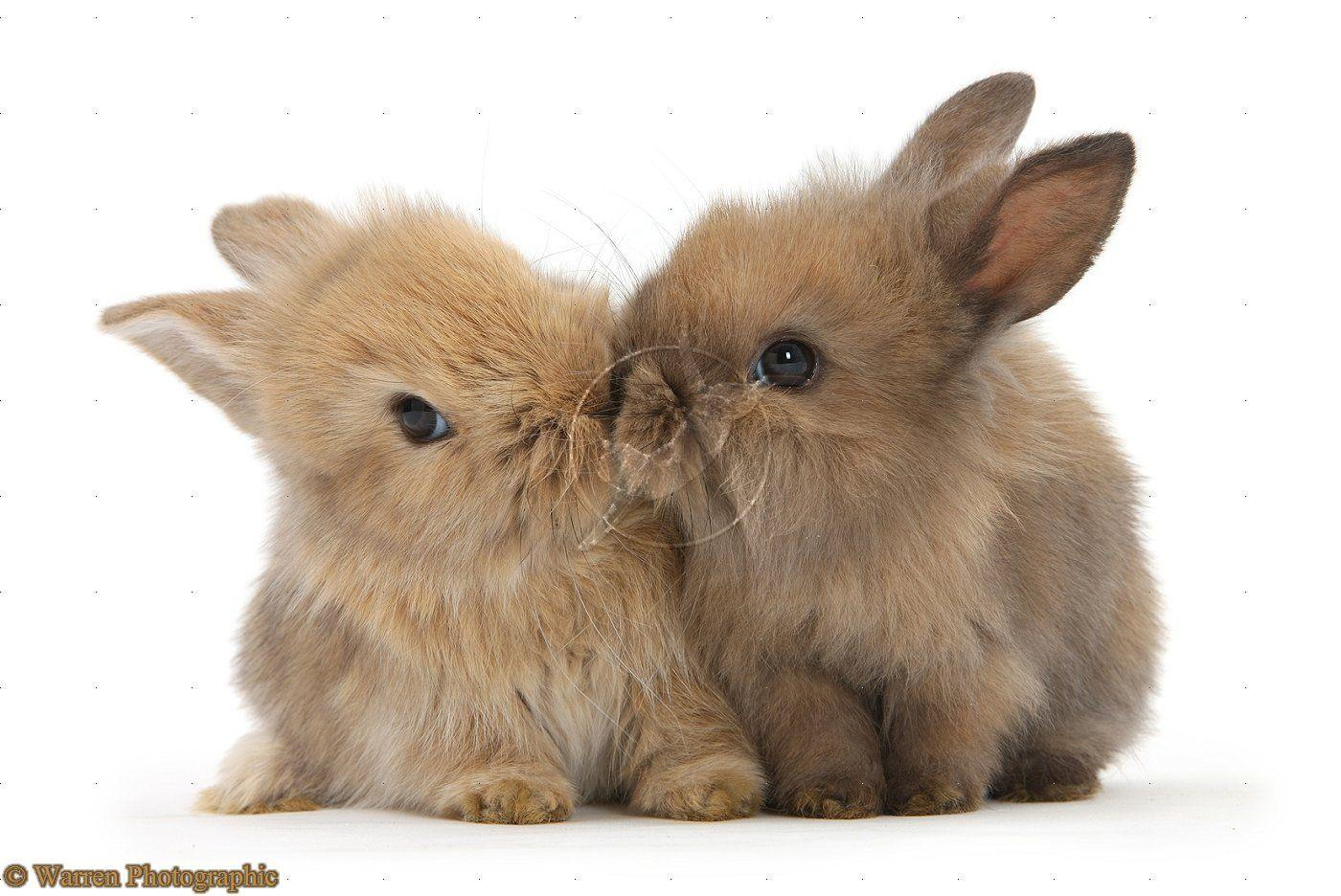 Cute Bunnies Wallpapers - Wallpaper Cave - photo#43