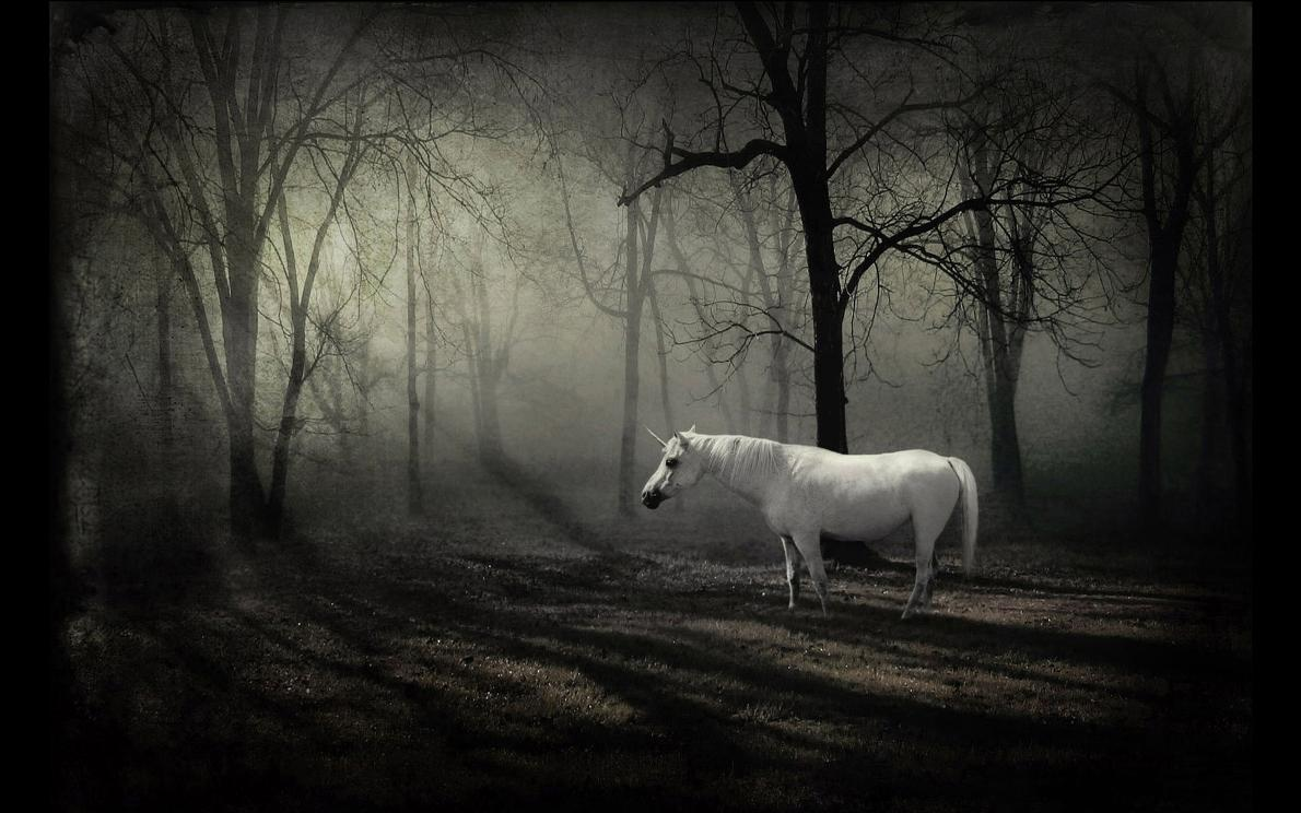 White horse in dark forest free desktop background - free ...
