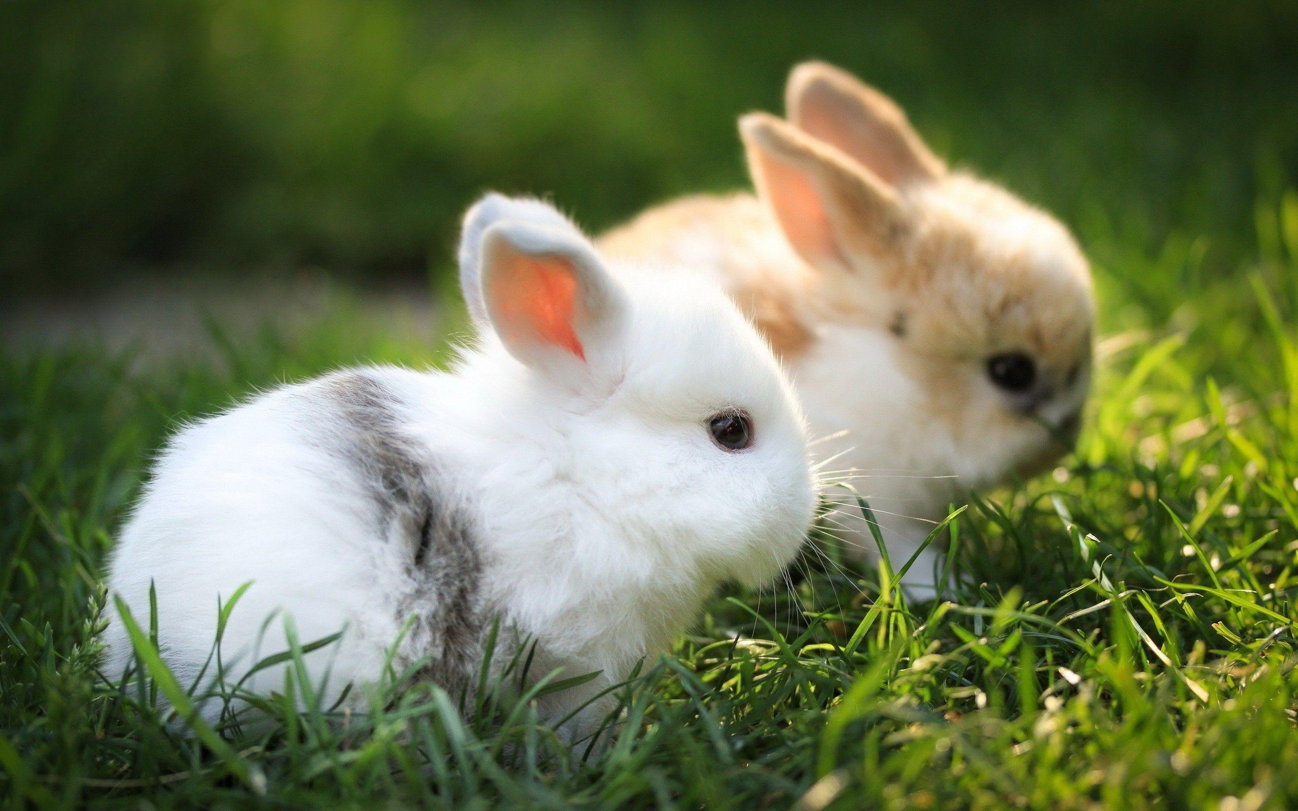 Bunny Pics 35