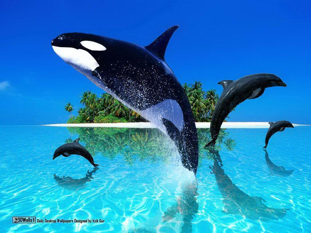 Orca fish computer illustration free desktop background - free ...