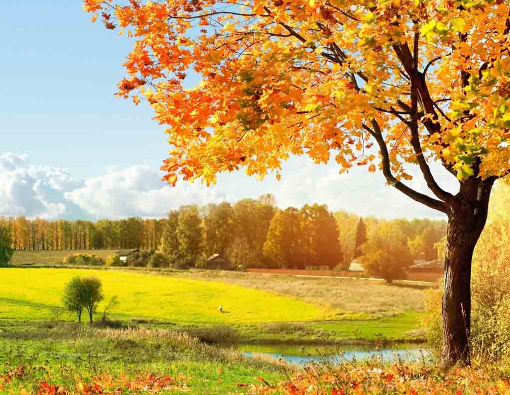 Free Autumn Desktop Backgrounds Wallpaper | ThemesCompany