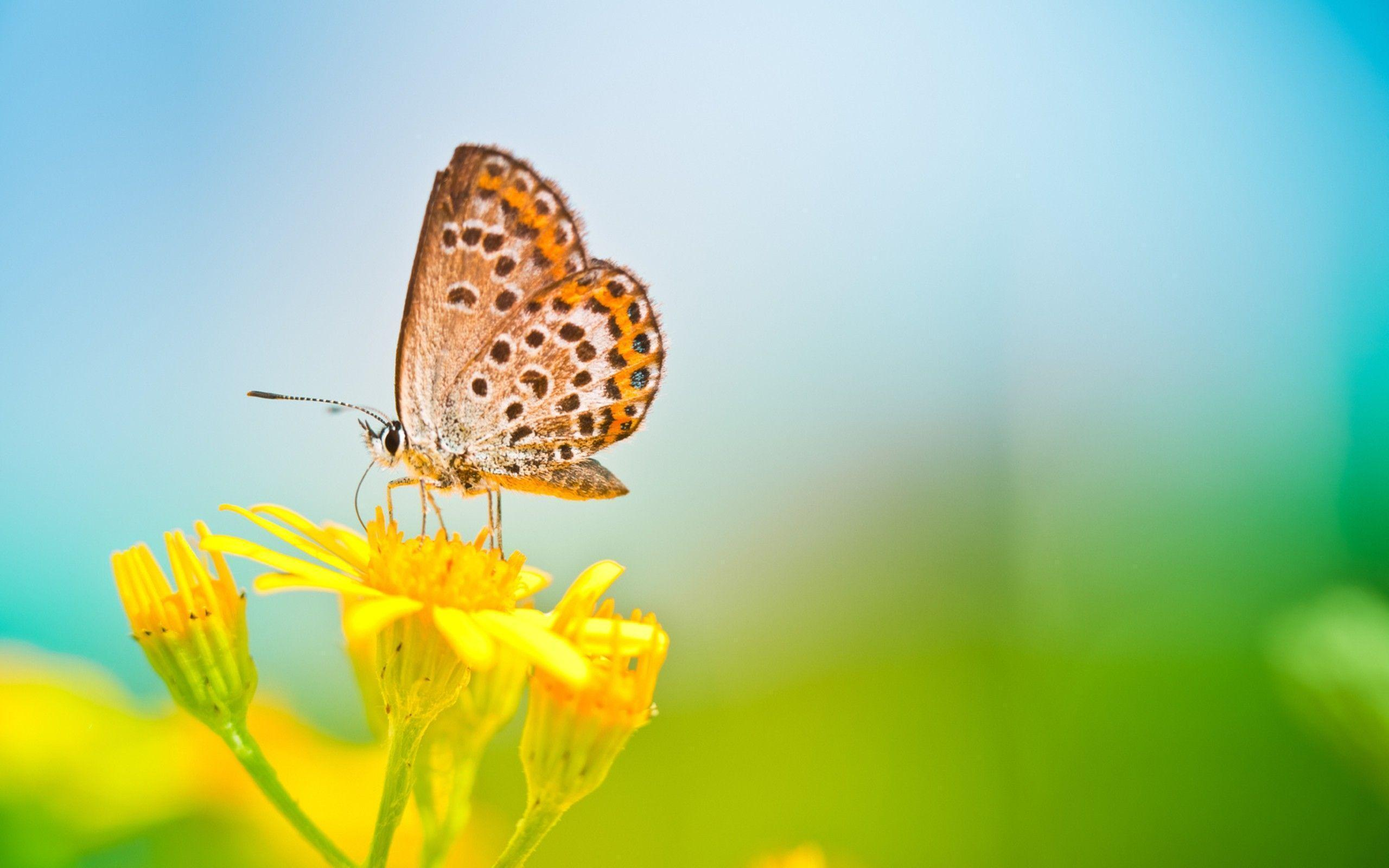 Butterfly Wallpaper Images - Wallpaper Cave