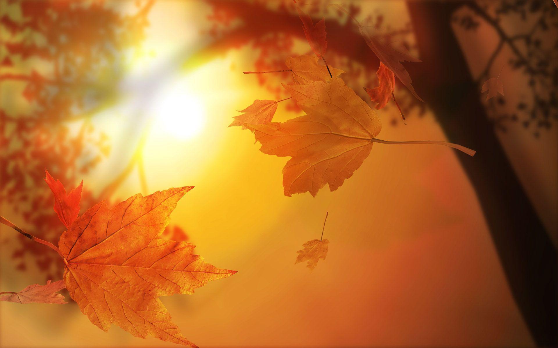 Stunning Fall Wallpapers - HD Wallpapers Inn