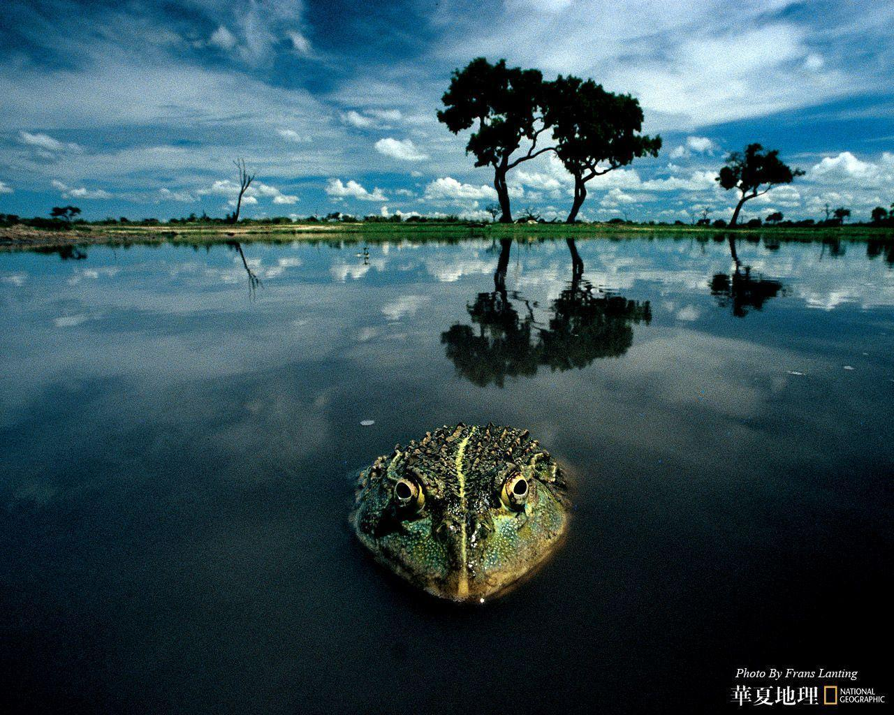 national geographic wallpaper background - photo #49
