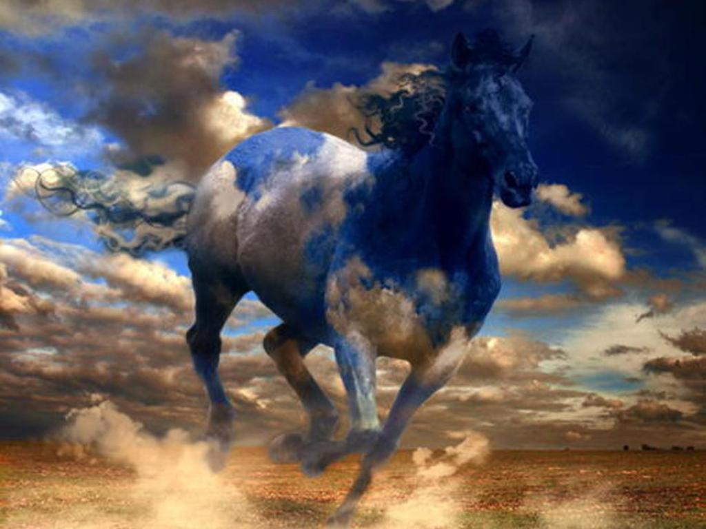free horse wallpapers - wallpaper cave