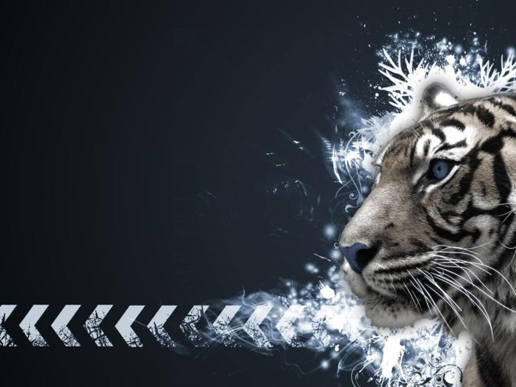 white tiger desktop wallpapers - wallpaper cave