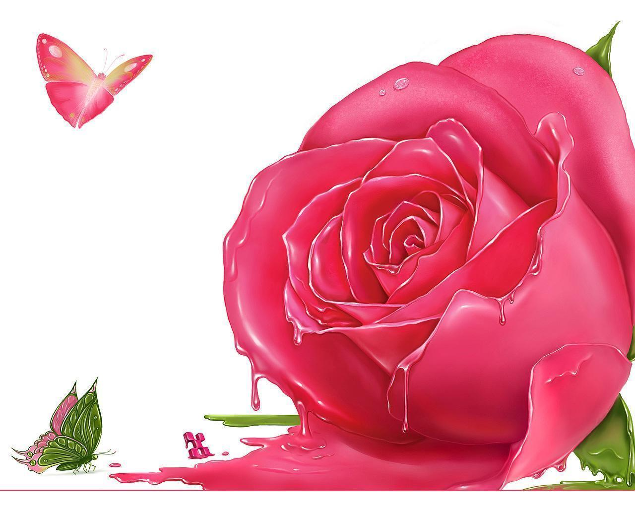 Flowers For > Single Pink Roses Wallpapers