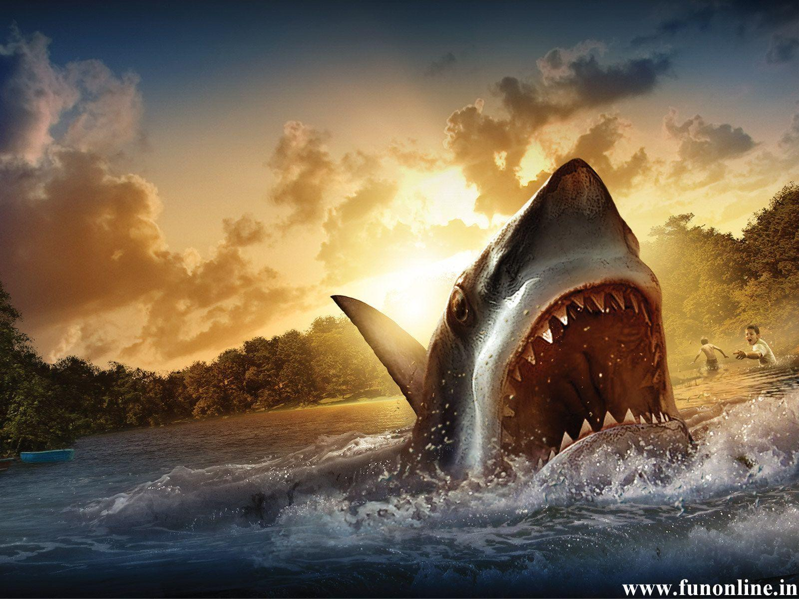 Shark Desktop HD Wallpapers - HD Wallpapers Inn