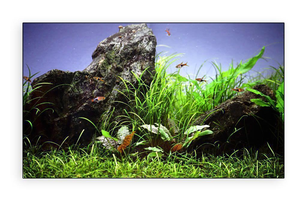 What about aquarium backgrounds? | AquaScaping World Forum