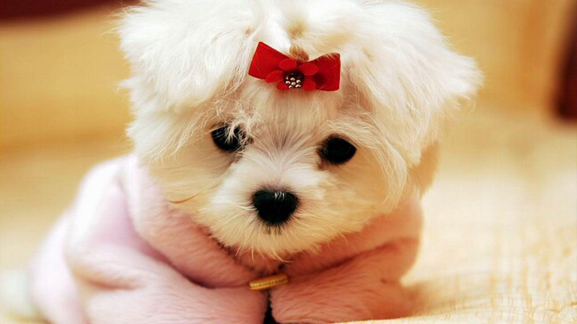 Wallpapers Collection «Beautiful Dogs Wallpapers»