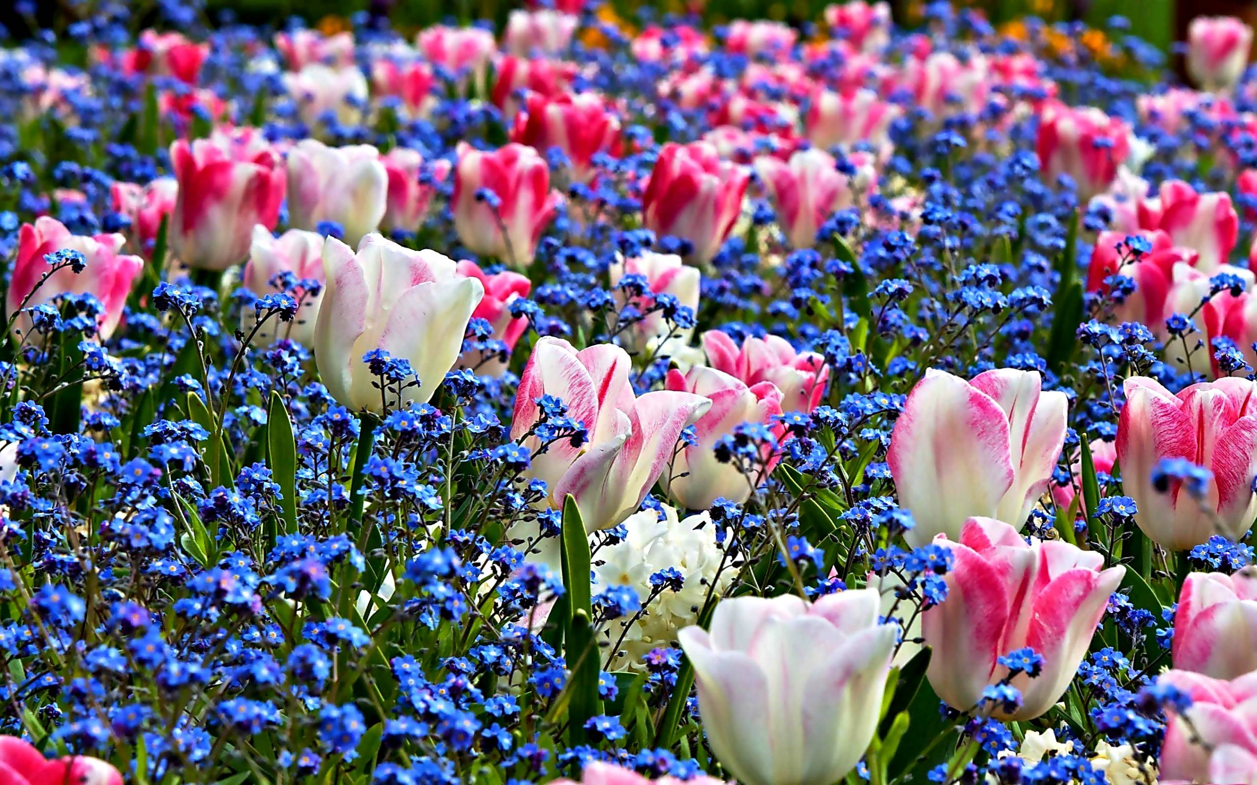 Spring Flowers Backgrounds Wallpaper Cave