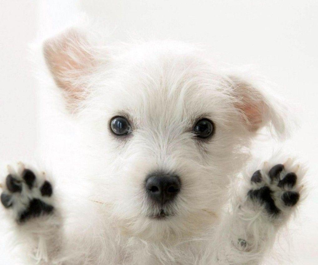 cute anime dog wallpaper - photo #18