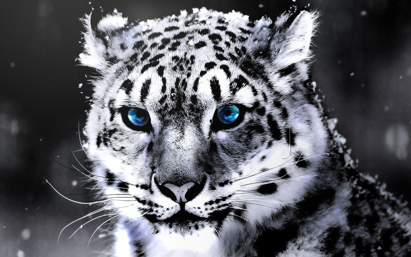 Wallpapers For > Cool White Tiger Wallpapers